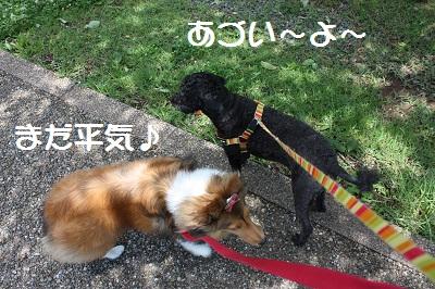 サクラと散歩5