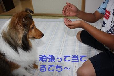 どっちの手