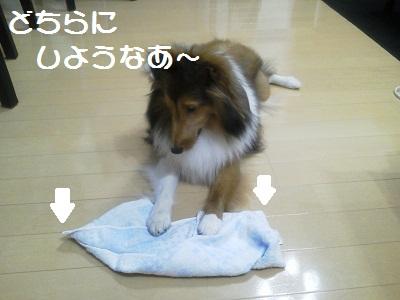タオル好き4