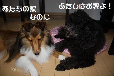 ちょっかい6