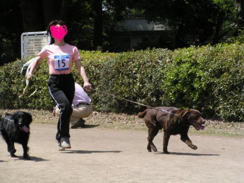 コピー ~ ドッグマラソン1