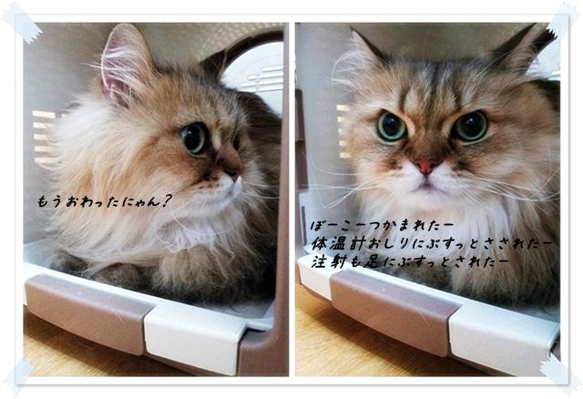 10_20120812005700.jpg