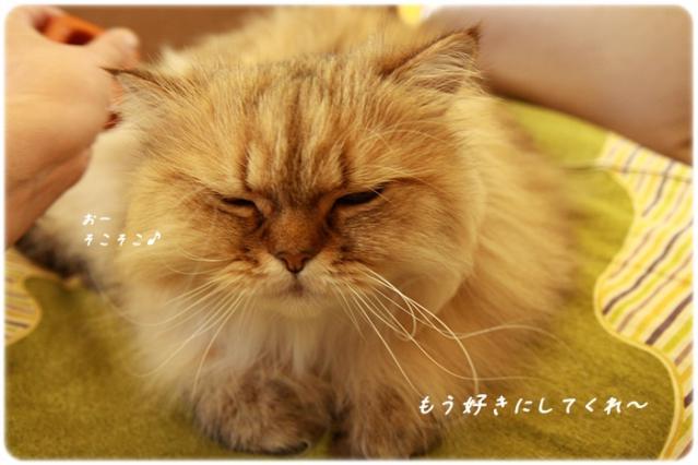 7_20121008120732.jpg