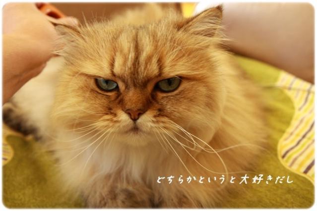 8_20121008120955.jpg