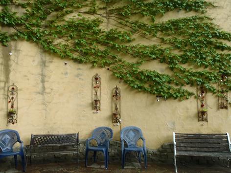 蔦の這う壁