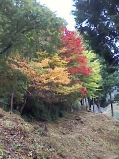 本仁田山の紅葉
