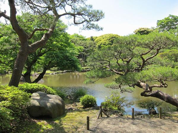 旧古河庭園・日本庭園3〔フリー写真〕