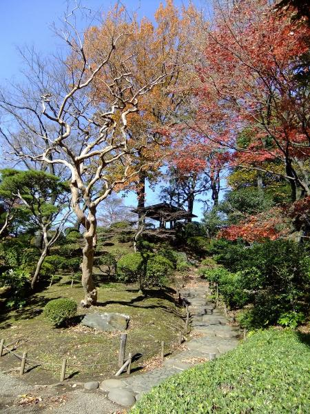 日本庭園7〔フリー写真〕