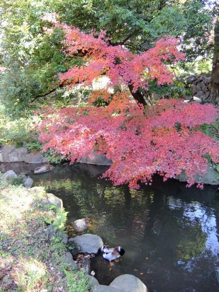 日本庭園16〔フリー写真〕