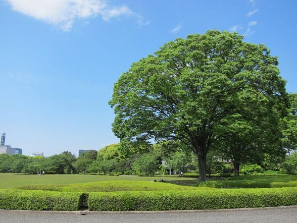 皇居東御苑11〔フリー写真〕
