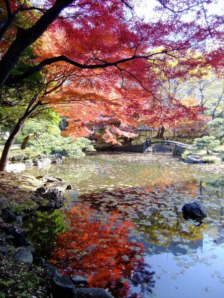 小石川後楽園12〔フリー写真〕