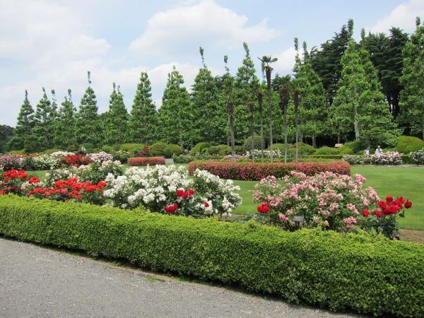 新宿御苑 バラ園5〔フリー写真〕