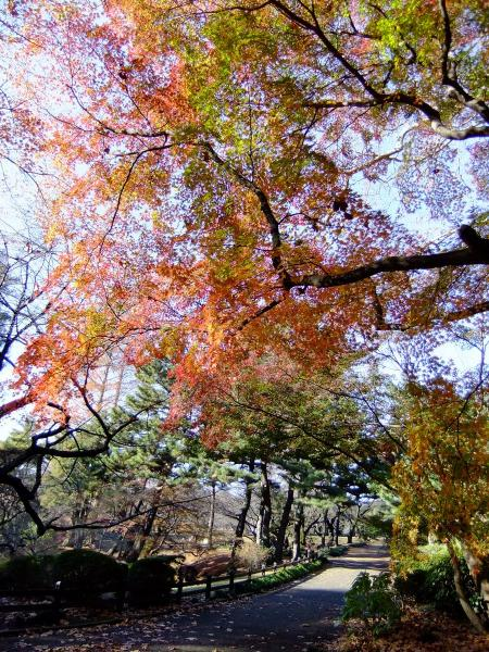 新宿御苑28〔フリー写真〕
