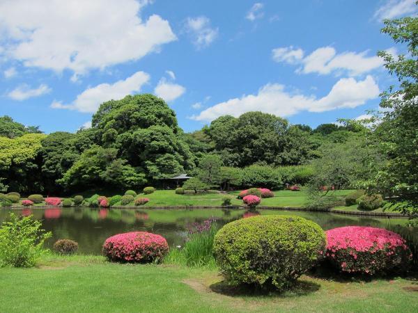 新宿御苑 日本庭園7〔フリー写真〕