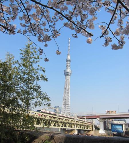 桜とスカイツリー3〔フリー写真〕