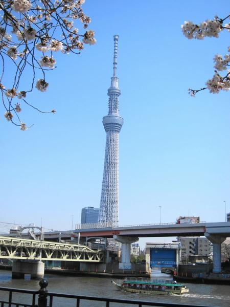桜とスカイツリー4〔フリー写真〕