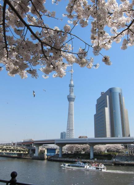 桜とスカイツリー5〔フリー写真〕