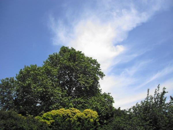 不思議な雲の写真2〔フリー写真〕