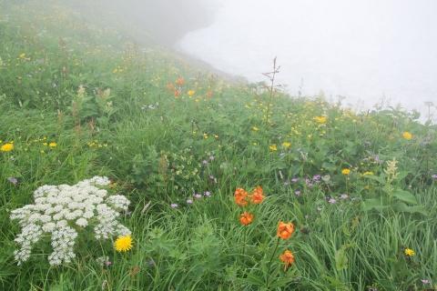 お花畑雪渓脇