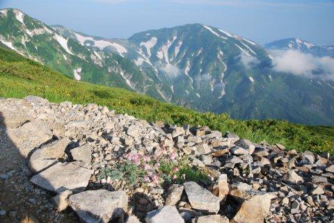 雪倉岳への稜線