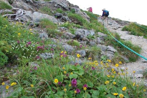 山頂まではお花畑の道