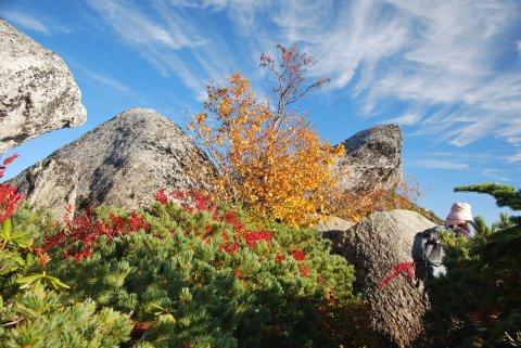 秋の空と紅葉