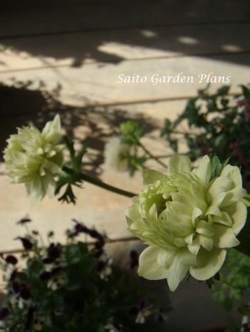 anemone+白_convert_20130307220034