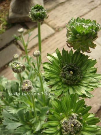 green+anemone_convert_20130307220107.jpg