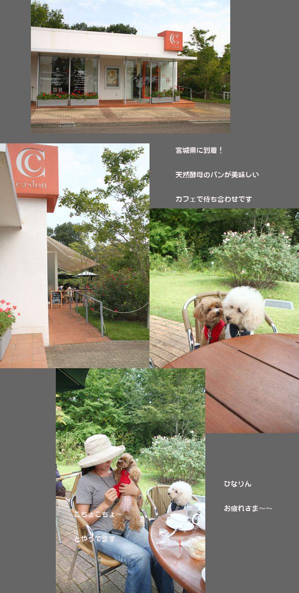 cafeh1.jpg