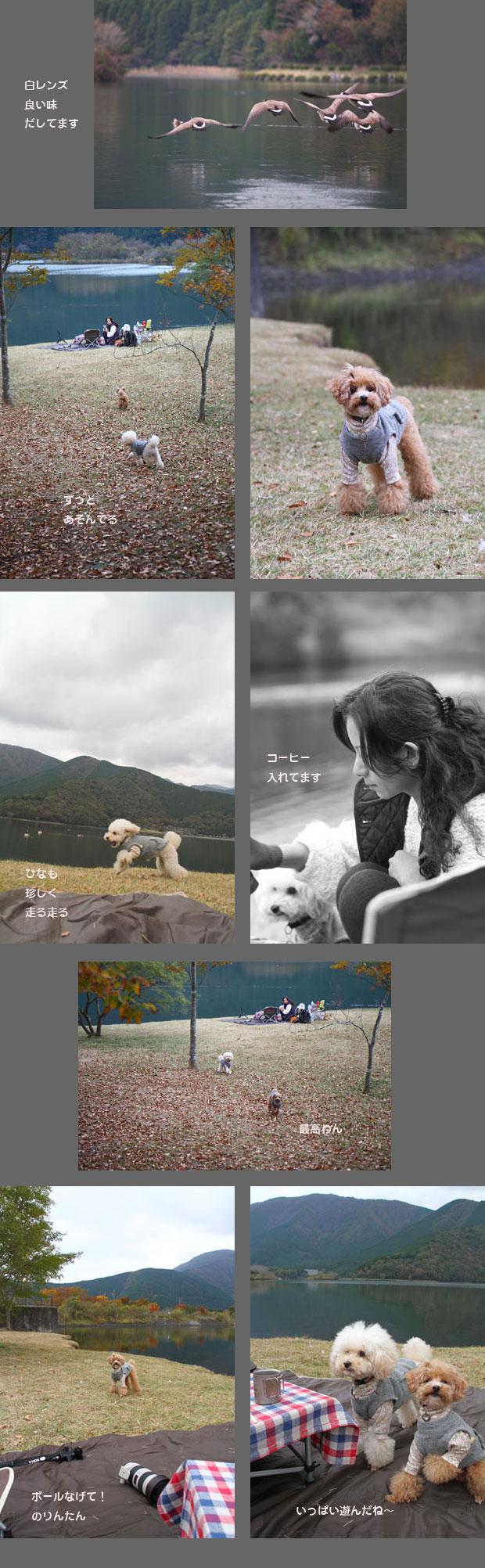 tanukikoh2.jpg