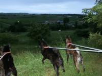 牧場の4匹