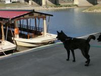 船とホッシー