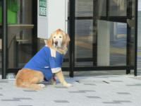 モヒカン犬