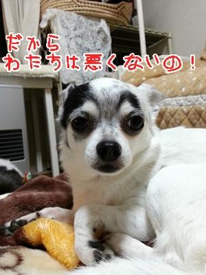 20121204_175027.jpg
