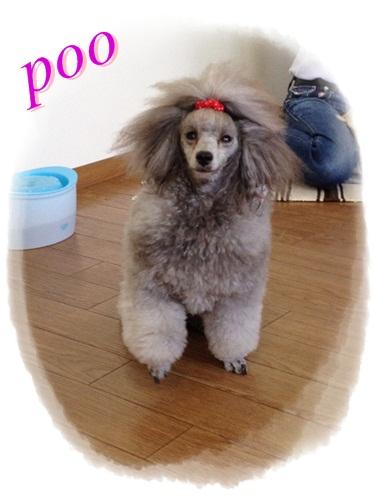 pooちゃん