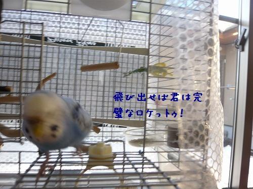 s-P1230133.jpg