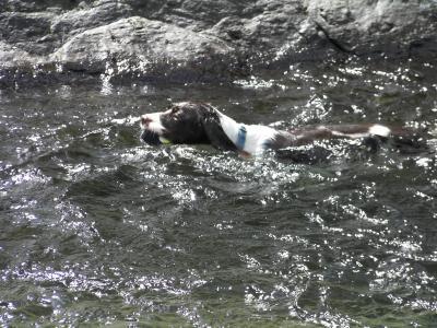 ブリ川遊び