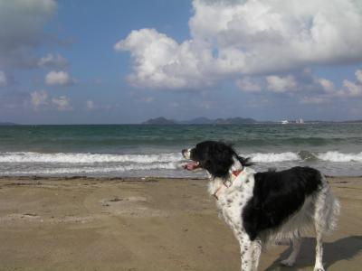玄界灘とジジ6
