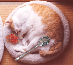 ネコカ~1