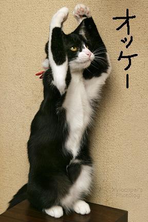 dancingcat2.jpg