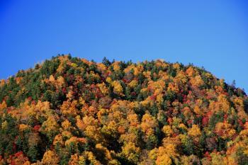 登山口のある豊平峡の紅葉。