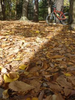 落葉の始まった円山公園。