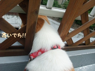 032_20120702132611.jpg