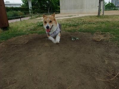 走る(1)