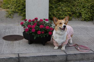 お花と一緒に