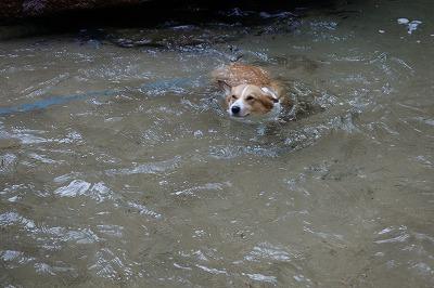 泳ぎ(1)