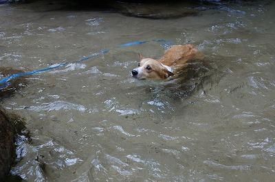 泳ぎ(2)