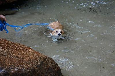 泳ぎ(3)
