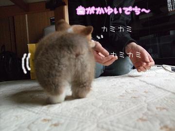 ろん姉たんのブログから・・・.(2).jpg