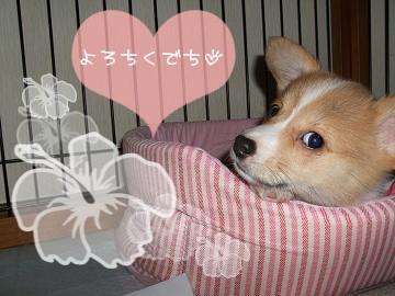 ろん姉たんのブログから・・・.(5).jpg